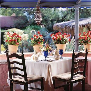 arizona-inn-tucson-dining-gallery1