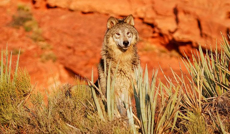 Arizona-Sonora Desert Museum at Tucson