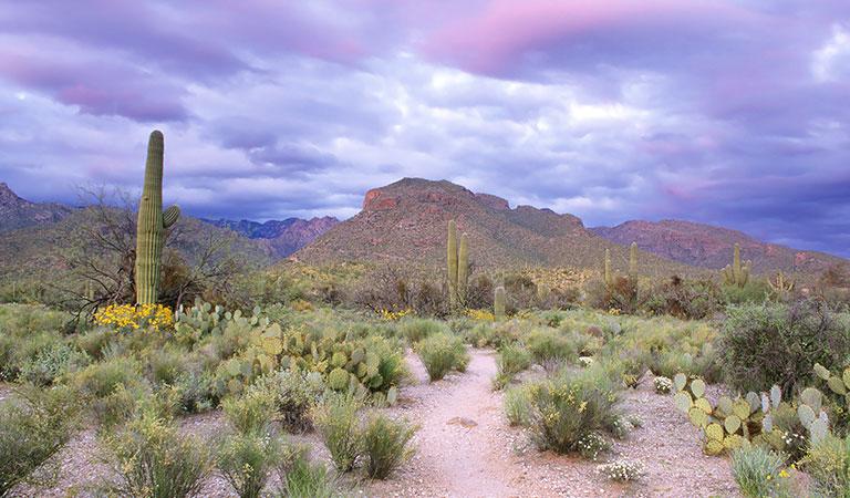 Sabino Canyon at Arizona
