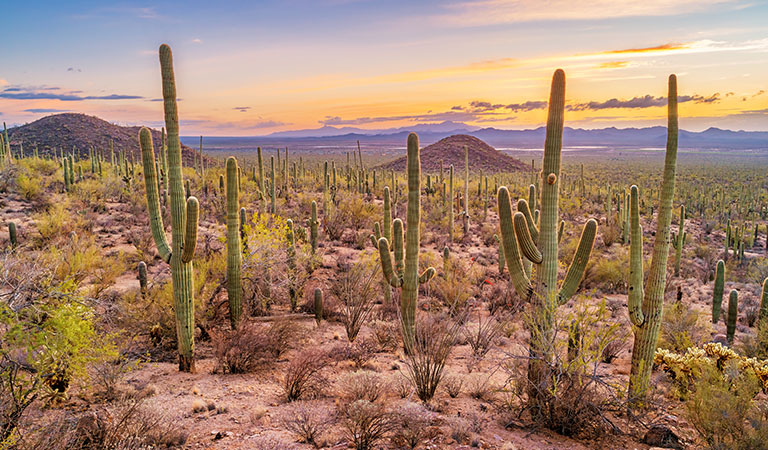 Saguaro National Park at Arizona