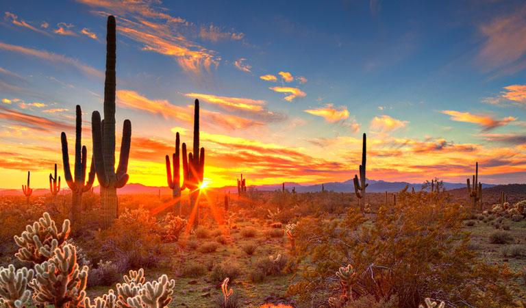 An Oasis in the Arizona Inn, Tucson